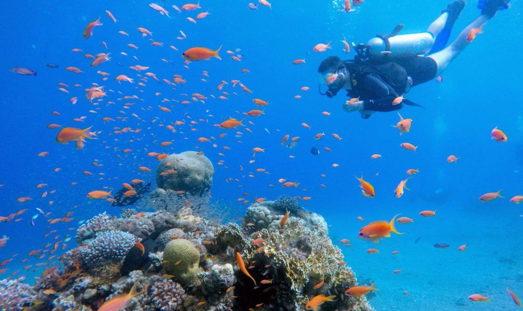 red sea snorkel diving eilat