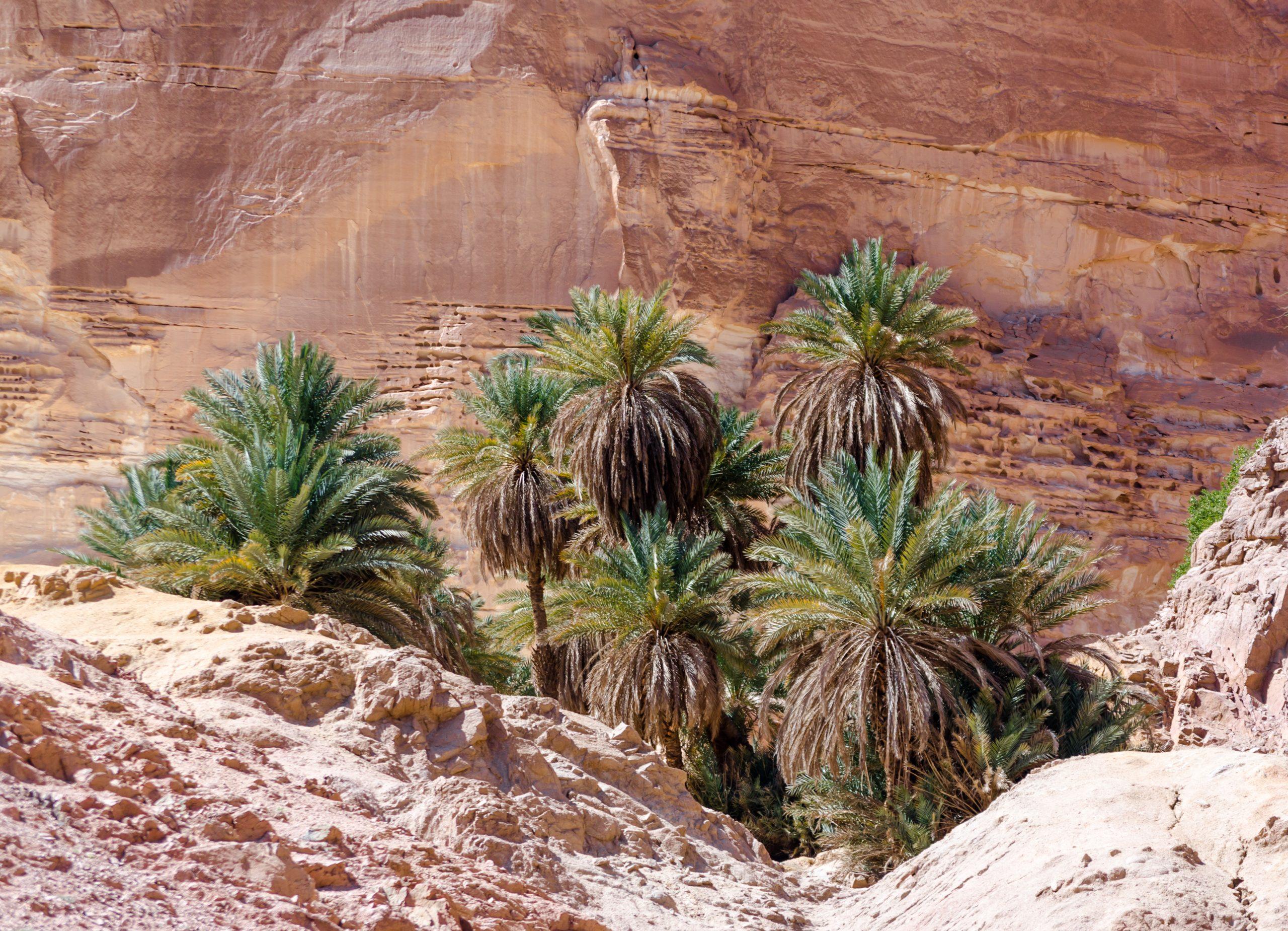 Oasis Sinai