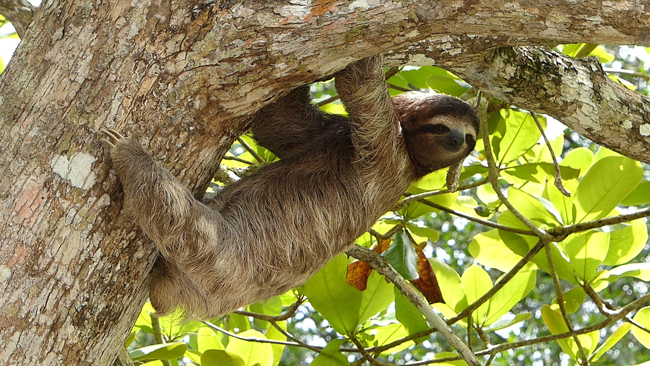 Animals During The Vista Los Suenos Jungle Adventure