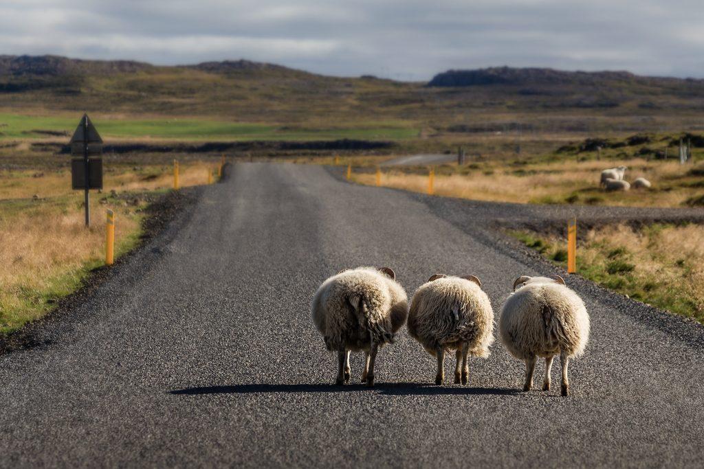 Getting from Reykjavik to Akureyri