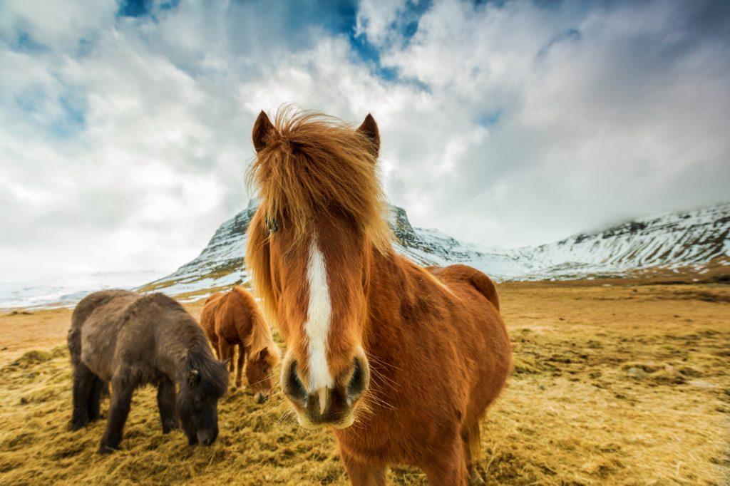 Getting from Reykjavik to Egilsstaðir