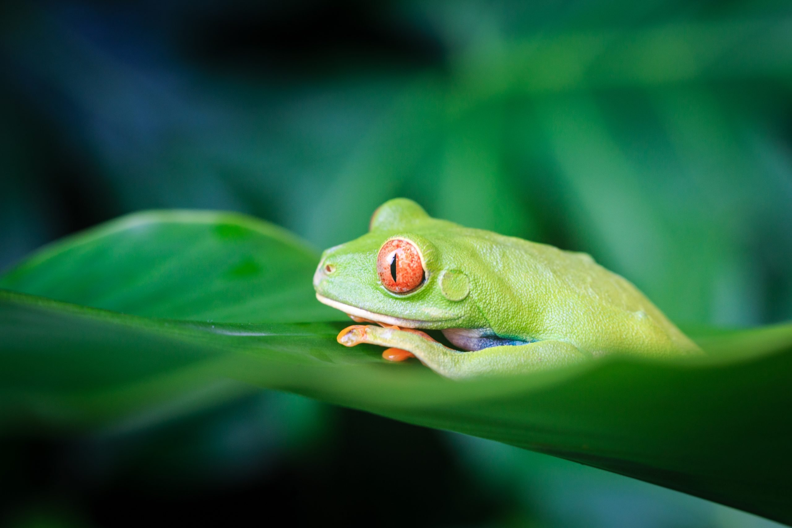 Top Experiences In Costa Rica