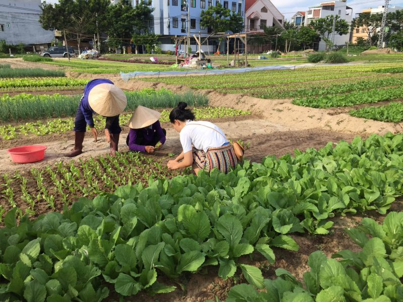 Visit At The Vegetable Farm During The Market And Cooking Experience In Da Nang_38