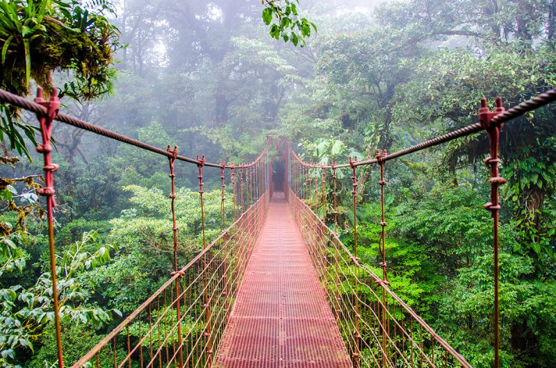 Monteverde-cloud-forest-nature Experience_37