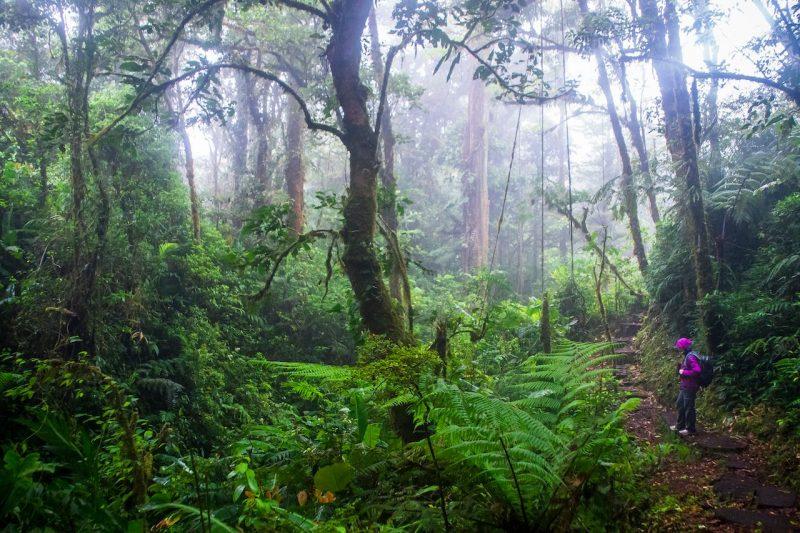 Monteverde-cloud-forest-nature Tour _37