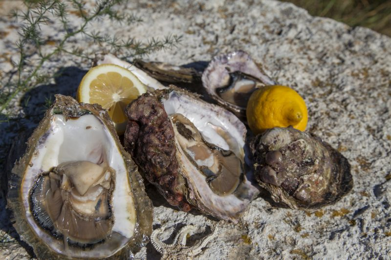Oyster Tasting During The Wine And Oyster Tasting Experience At The Pelješac Peninsula
