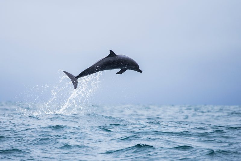 Spot Dolphines On Your Manuel Antonio Catamaran Tour