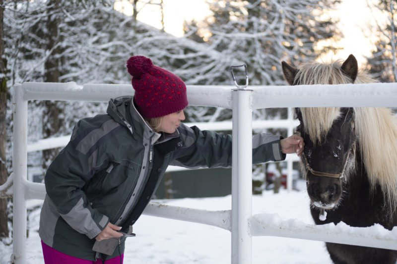 Stop By The Friðheimar Farm And Learn About The Greenhouses And The Pure Breed Icelandic Horses On The Golden Circle Small Group Tour