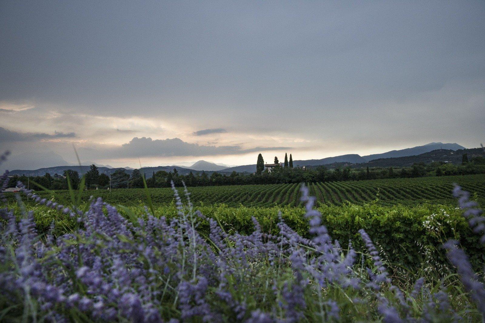 Discover The Beautiful Landscape Of Bardolino During The Wine Tasting Experience In Bardolino (lake Garda)_52