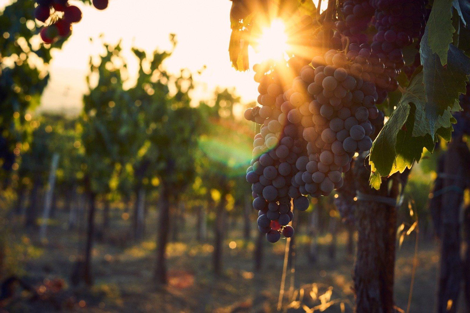 Enjoy A Walk Over The Vineyards On The Wine Tasting Experience In Bardolino (lake Garda)_52