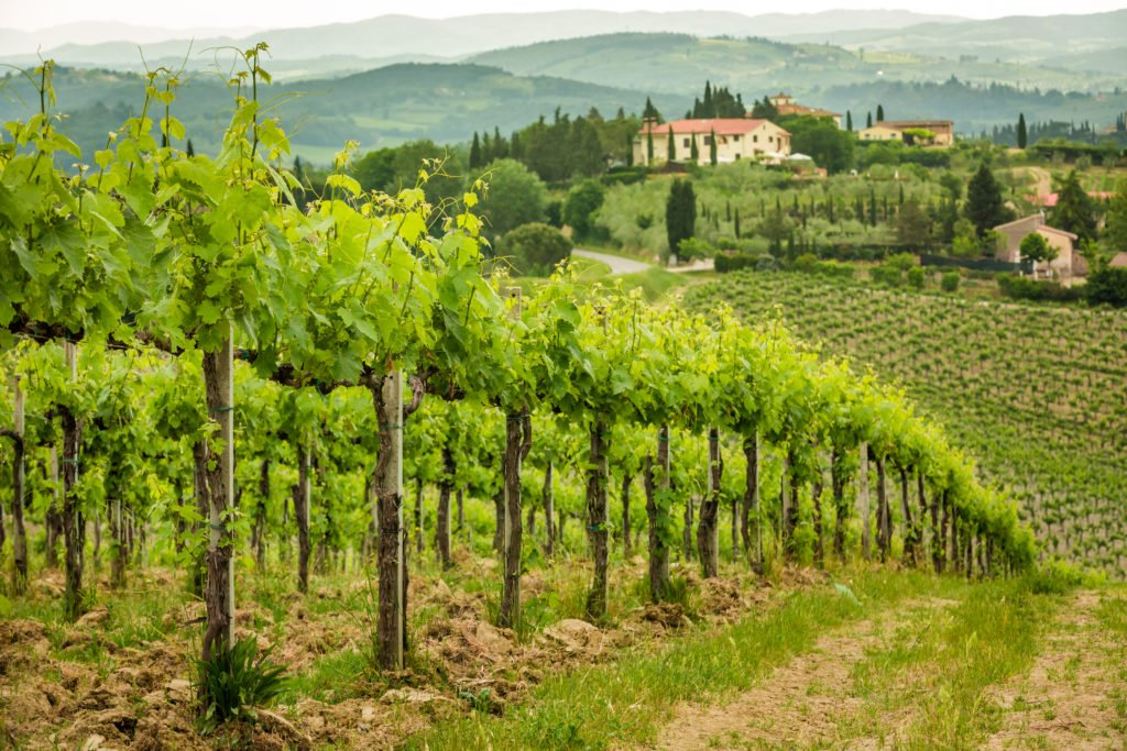 Tuscany Wine Travel in Italy: An Insider Guide