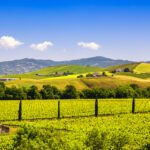 Brunello Wine Tasting & Lunch In A Tuscan Castle From Montalcino_6