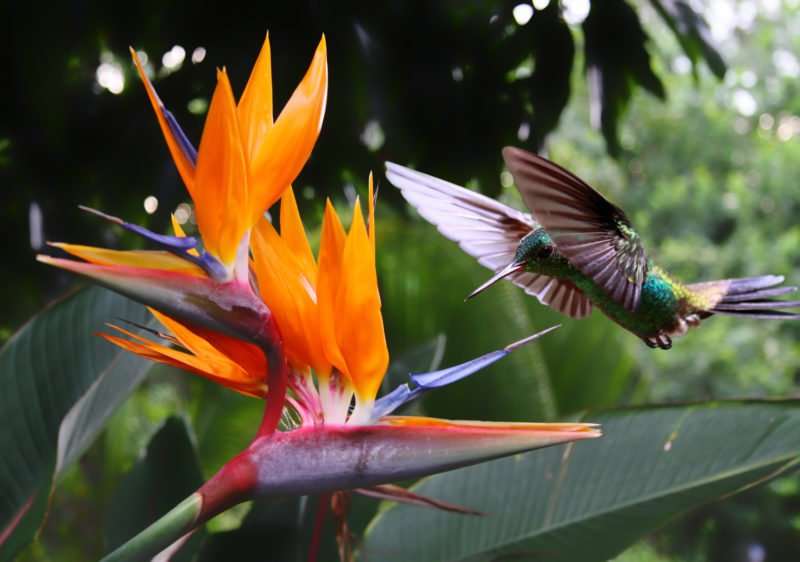 Admire The Beautiful Hummingbirds On The Enjoy The Views Over Manuel Antonio On The Tortuguero, Arenal & Manuel Antonio 10 Day Adventure Package Tour