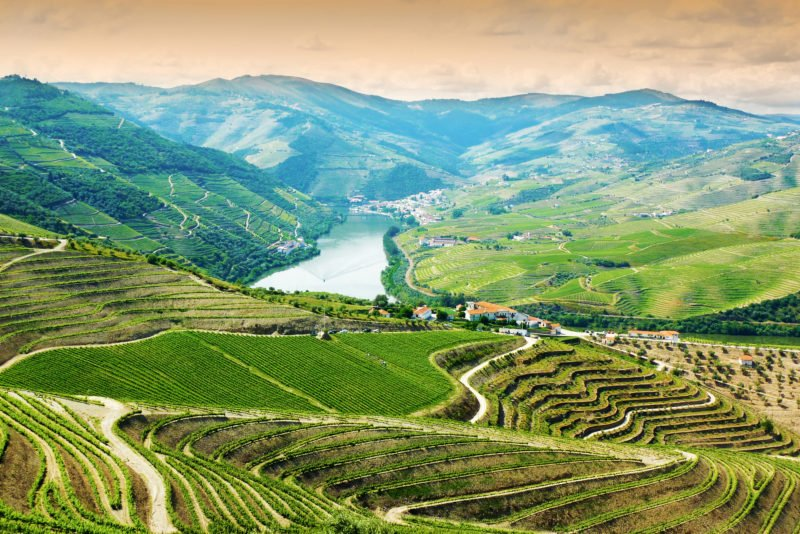 Admire The Beautiful Views Over The Vineyards On The Douro Valley Wine Tasting Tour From Porto