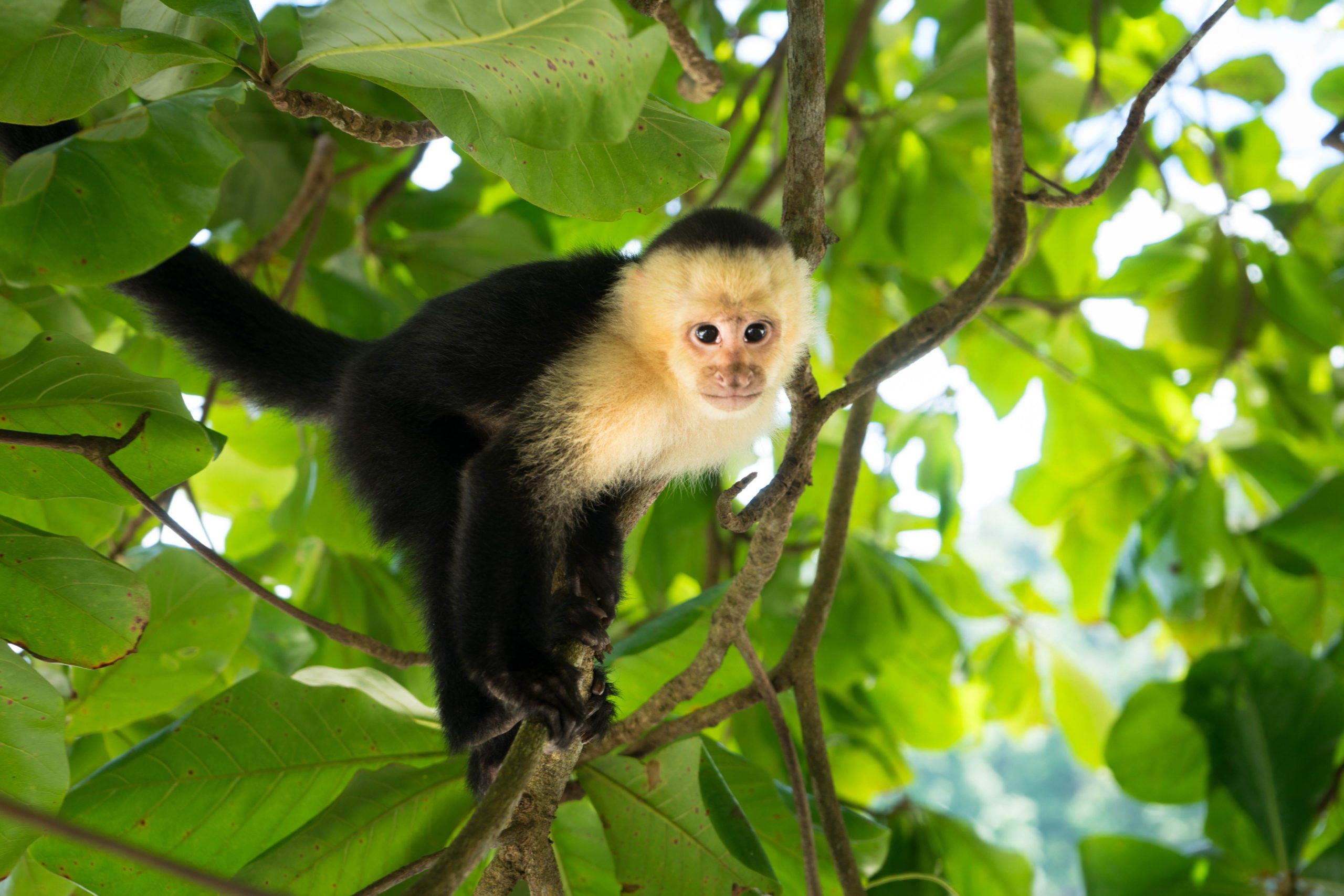 Discover The Diverse Flora And Fauna Of Costa Rica On The On The Tortuguero, Arenal & Manuel Antonio 10 Day Adventure Package Tour