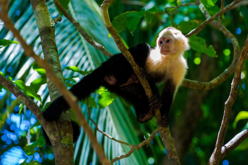 Experience The Different Animals Of Costa Ricas Fauna On The 6 Day Pacific Coast And Arenal Tour Package