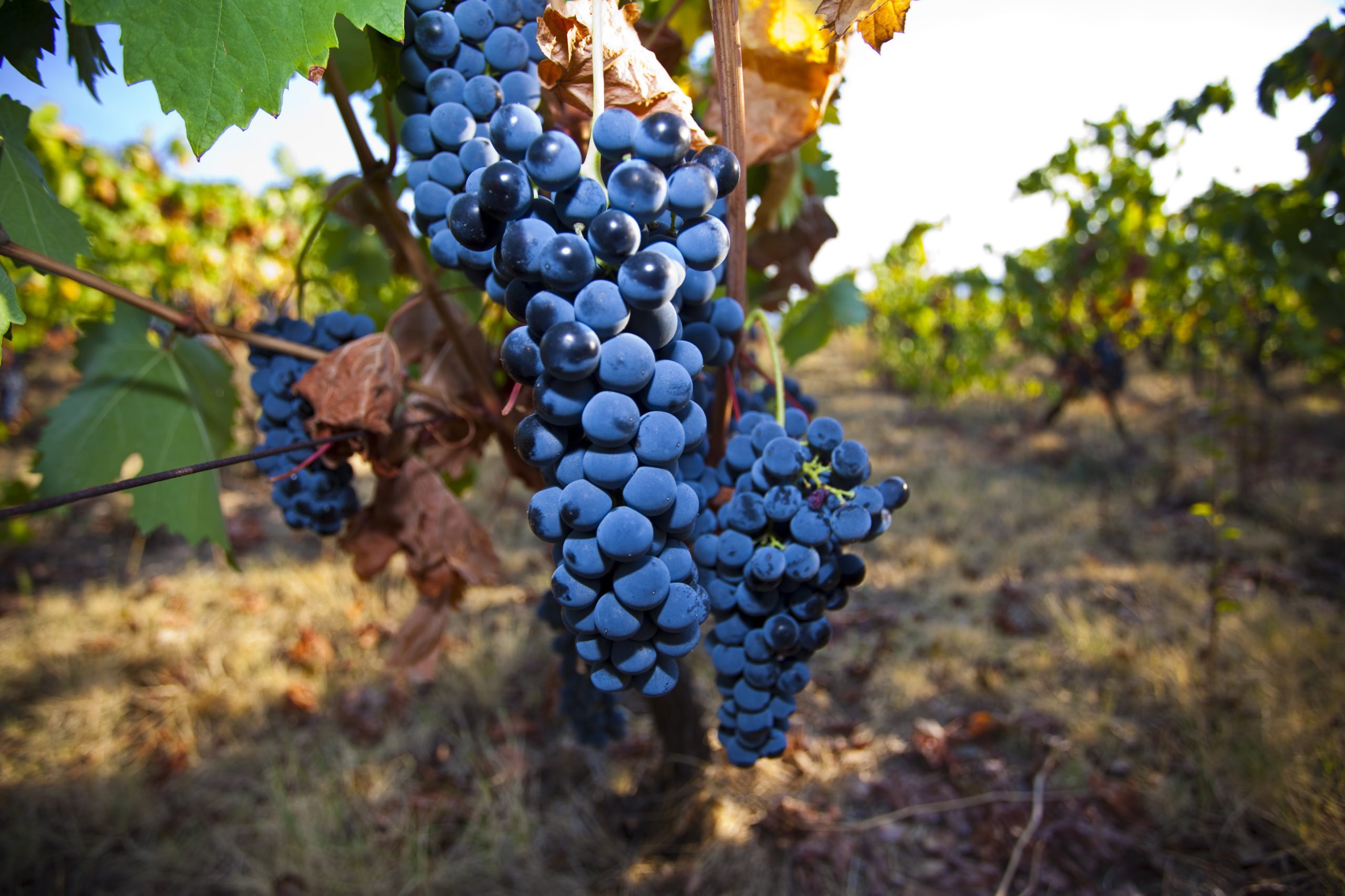 Taste The Delicious Wine Of Douro Valley On The Douro Valley Wine Tasting Tour From Porto