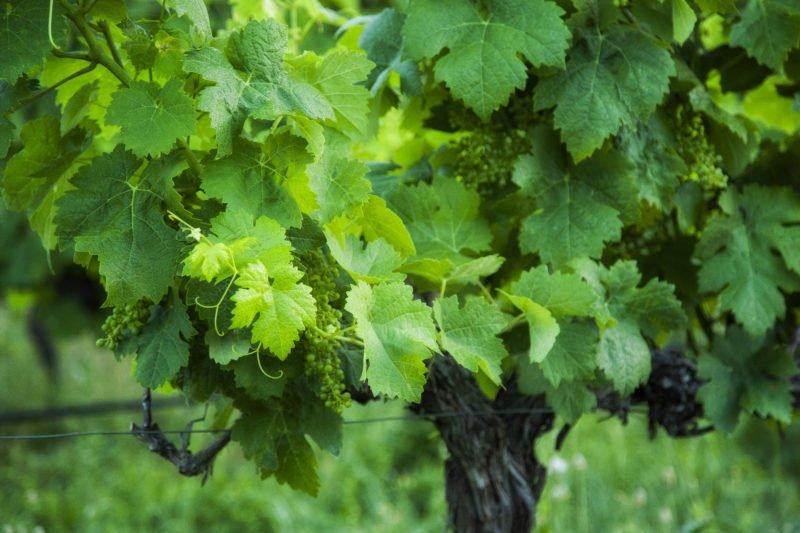 Taste The Wine Of Monte Da Ravasqueira On The Evora Wine Tasting Tour From Lisbon_59