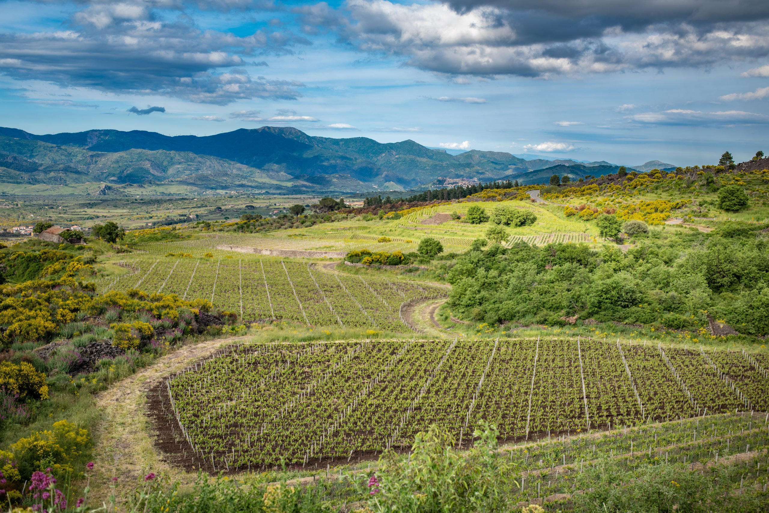 Try The Delicious Mt Etna Wines On The 8 Days Highlights Of Sicily Tour Package