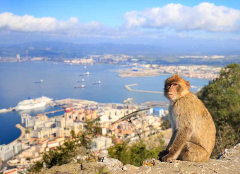 Admire The Funny Apes On The Gibraltar Tour From Seville