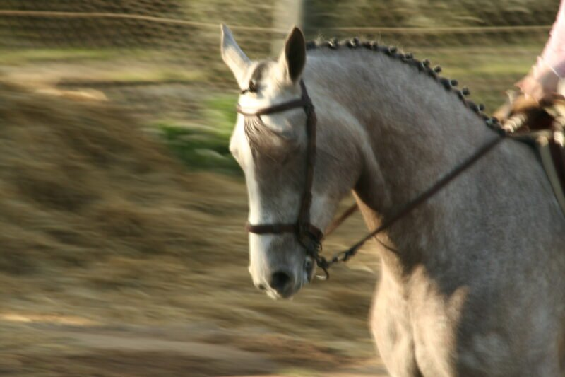 Andalusian Horseback Riding From Seville_sup