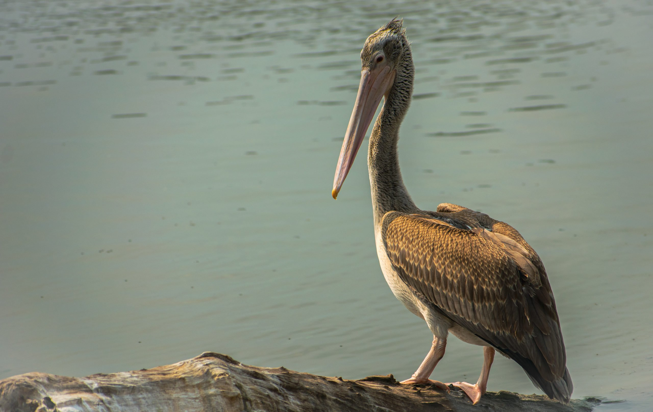 Discover The Rich Bird Life Of Southern India In Our Wildlife Tour In Chennai