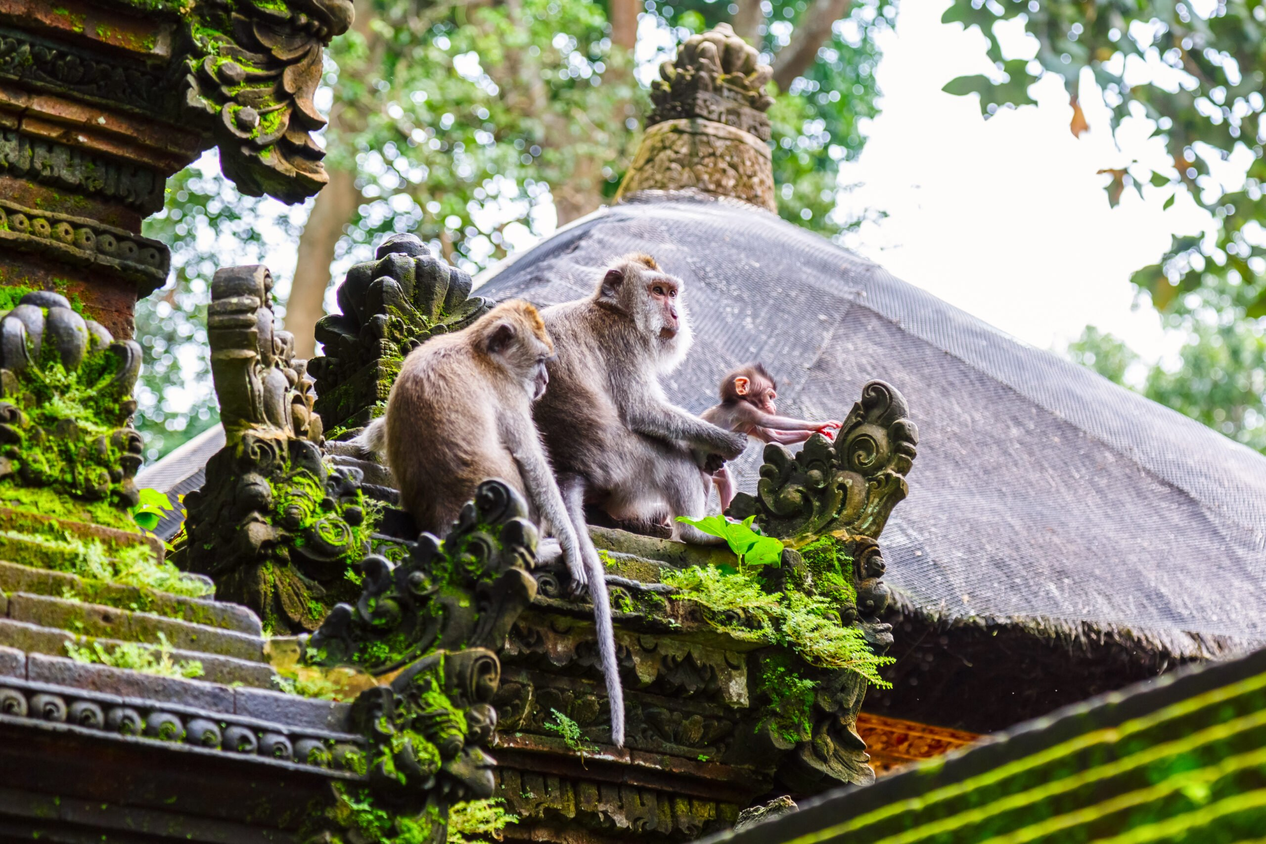 Discover The Temples In The Monkey Forest On The Balinese Local Homestay Experience In Bresela Village