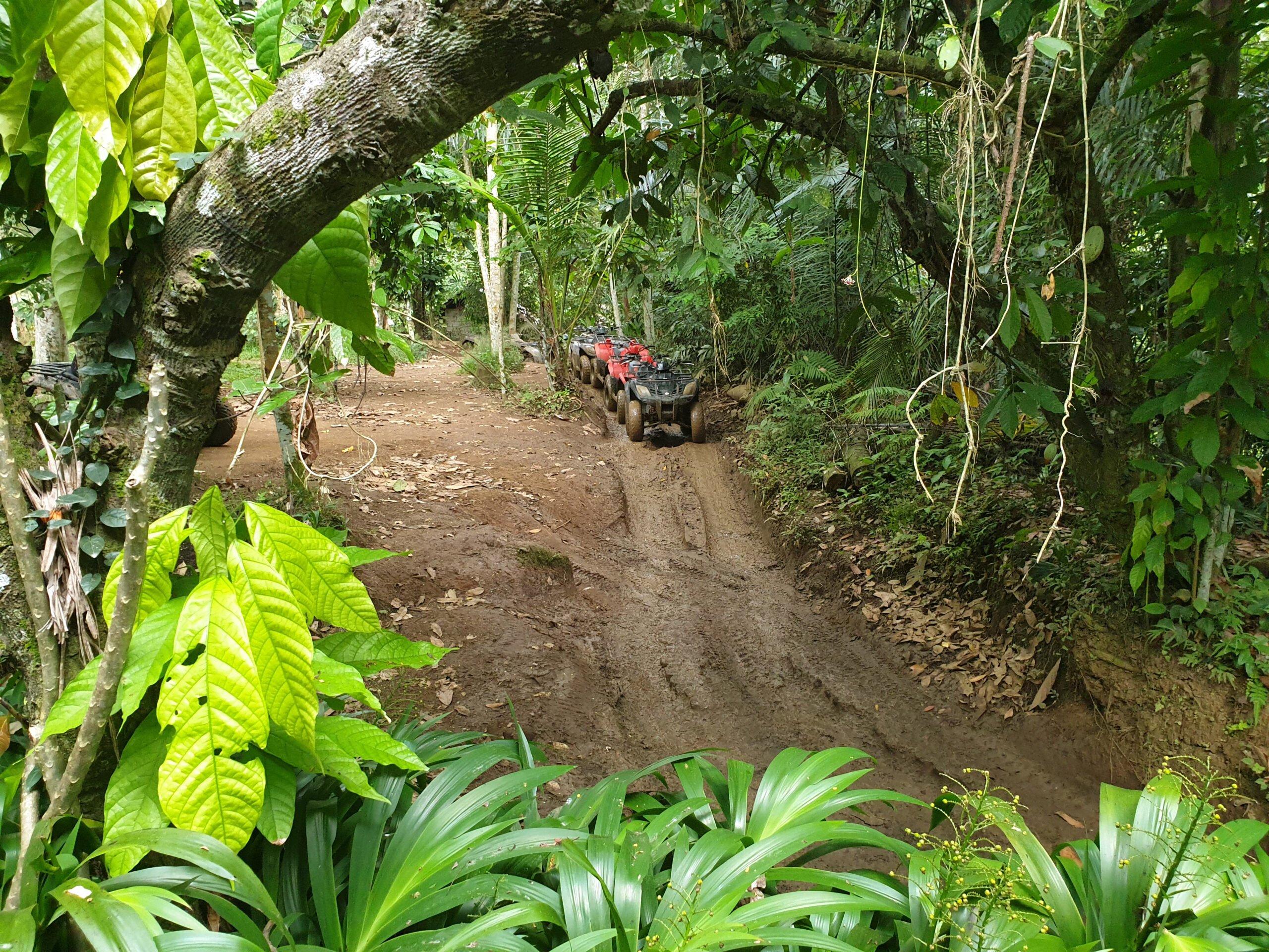 Drive On The Muddy Jungle Tracks During The Bali Atv Adventure