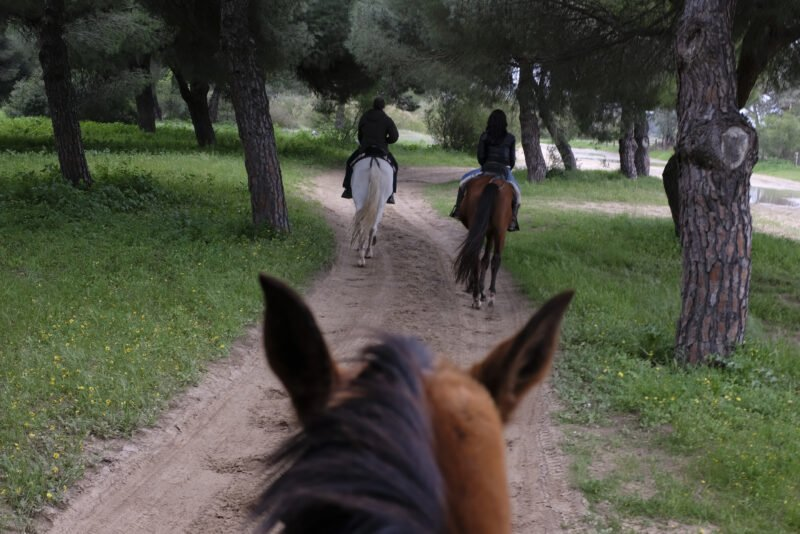 Enjoy A Day On The Back Of A Andalusian Horse On The Andalusian Horseback Riding From Seville