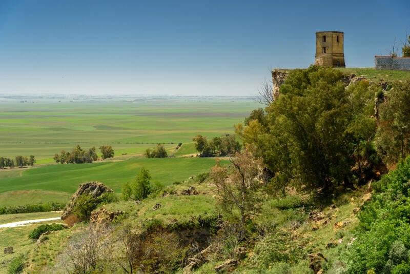 Enjoy The Beautiful Landscapes Of Carmona Village On The Olive Oil Tasting & Carmona Village Tour From Seville