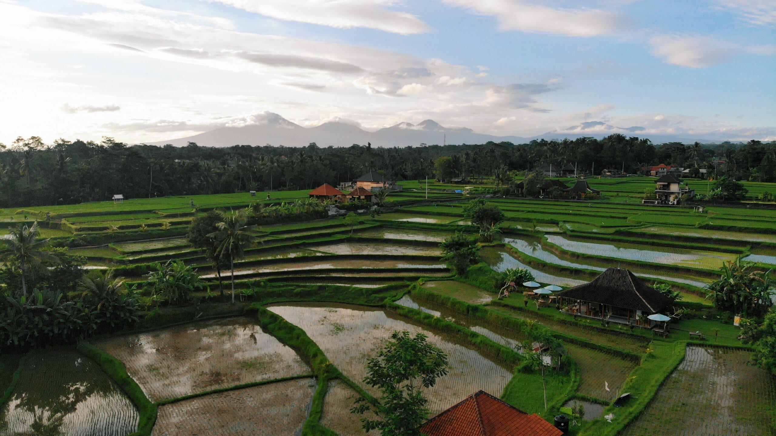 Enjoy Views Over The Rice Terraces On The Bali Atv Adventure