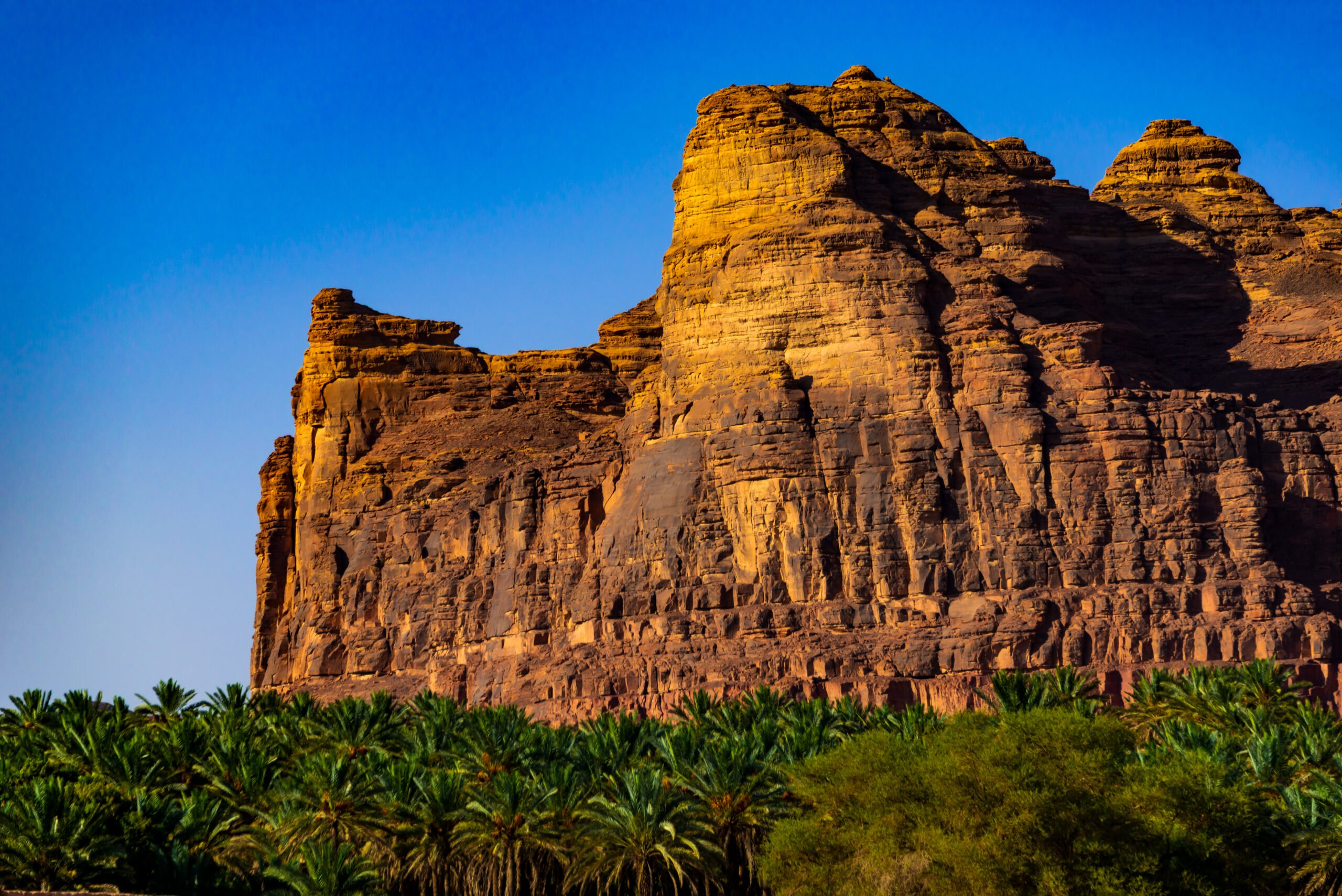 Explore The Nature Reserve Around Tabouk On The 4 Day Madain Saleh Tour From Tel Aviv & Jerusalem