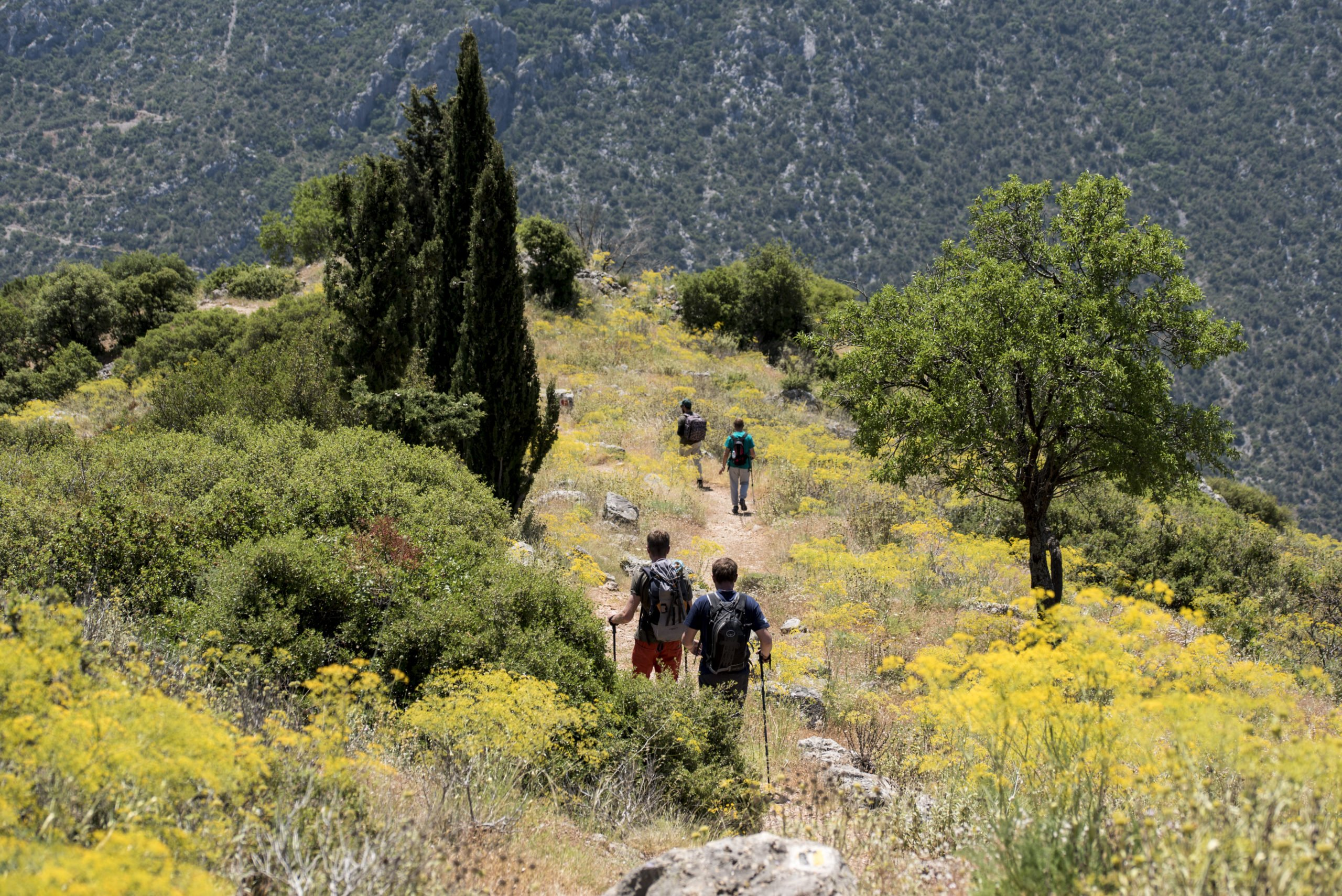 Hike Up To The Famous Ruins Of Delphi On The Delphi History And Hiking Tour From Athens_70