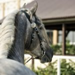 Join Us To The Andalusian Horseback Riding From Seville