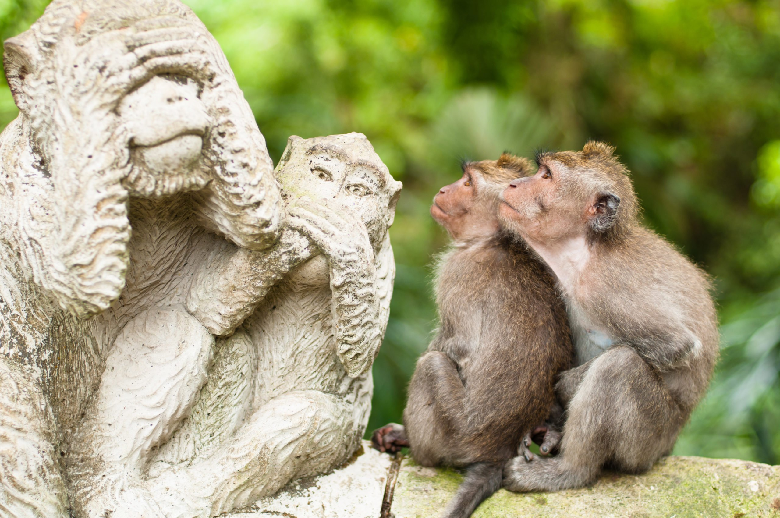 Join Us To The Ubud Village And Monkey Forest Tour