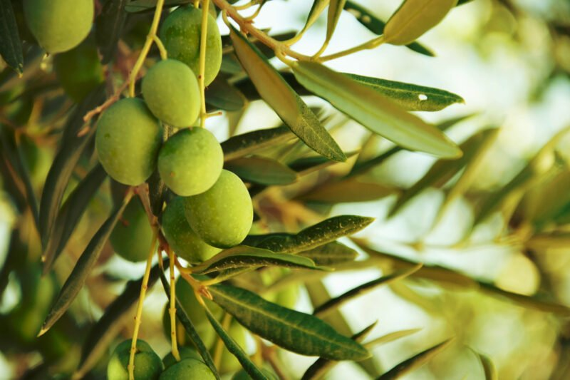 Join Us To The Exciting Olive Oil Tasting & Carmona Village Tour From Seville