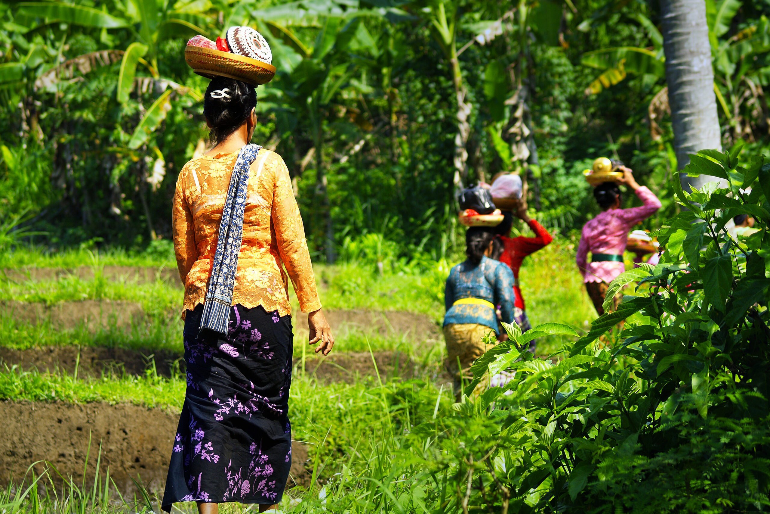 Learn More About Balinese Traditions During The Balinese Local Homestay Experience In Bresela Village