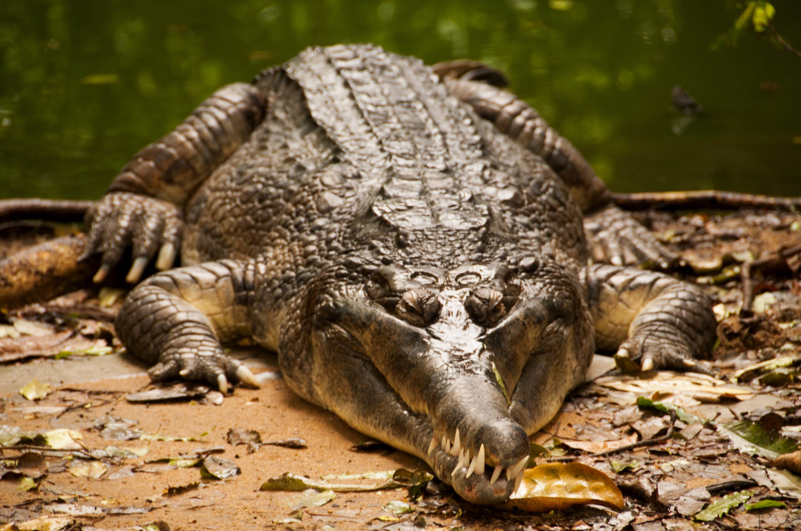Meet More Than 2500 Reptiles At Chennai Crocodile Park In Our Wildlife Tour In Chennai