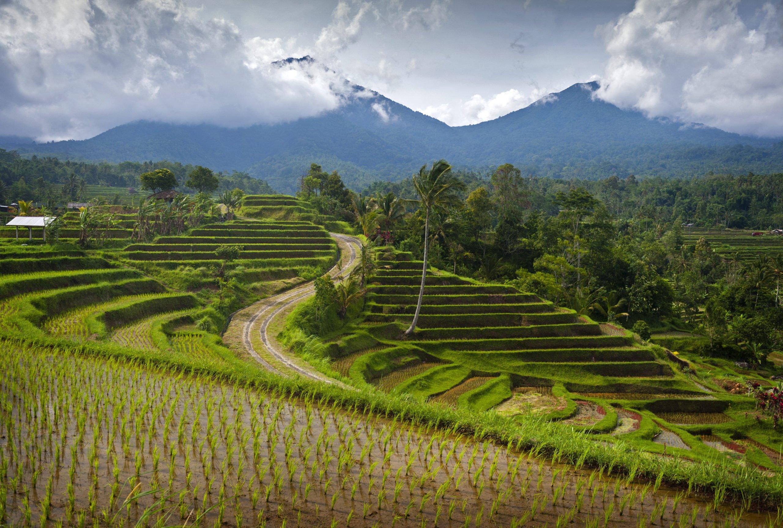 Visit The Unesco World Heritage Site Of Jatiluwih Rice Terrace On The Cultural Heritage Tour From Ubud, Sanur, Nusa Dua, Tanjung Benoa, Seminyak