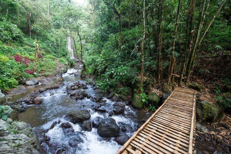 Wonder Through The Stunning Jungle Near Munduk Village On The Northern Bali Experience