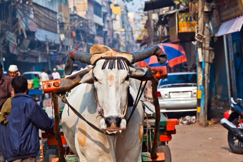 Discover The Authentics Flavours Of Old Delhi Streets In Our Old Delhi Tour