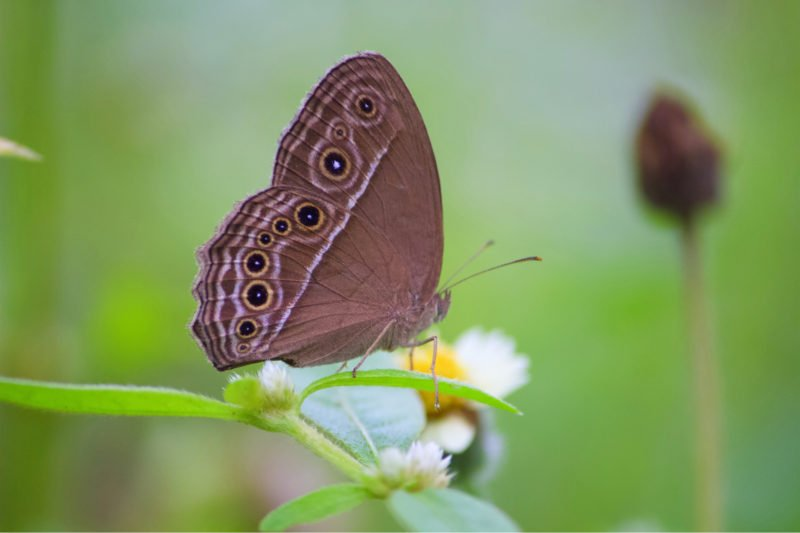 Explore The Fascinating Butterfly Park In Our Chennai Wildlife Tour