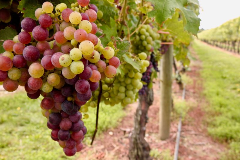 Visit Local Winery In Our Taste Of Rhodes Tour
