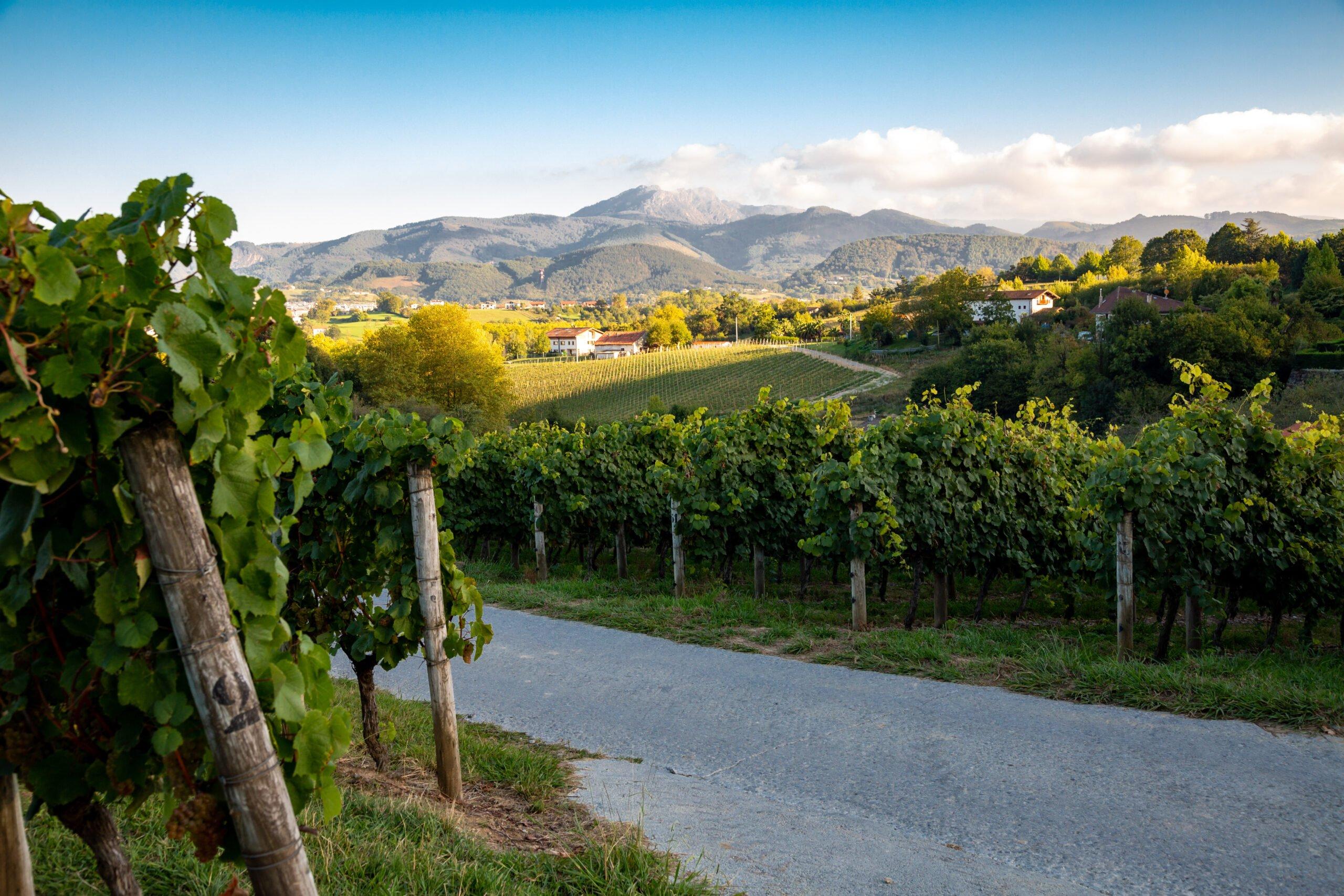 Admire The Marvelous Landscape Near Bilbao On The Txakoli Wine Tasting Tour From Bilbao