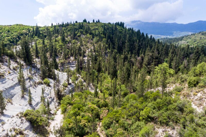 Experience The Silence In The Pine Tree Forests Of Lefkada On The Eastern Lefkada Hiking Tour From Kolivata!_89