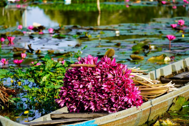 Mekong Delta Tour From Ho Chi Minh City_7