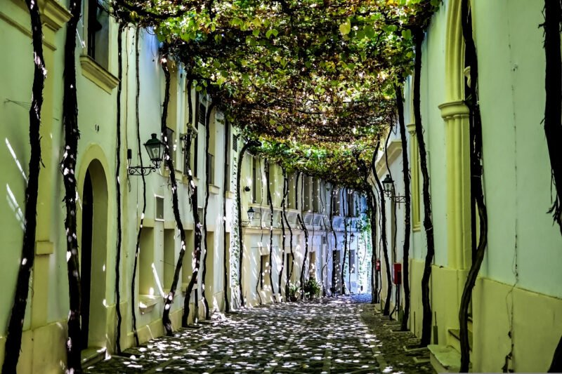 Stroll Trough The Streets Of Jerez And Learn More About The Area On The Cadiz & Jerez Sherry Tasting Tour From Seville