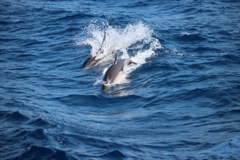 Watch Out For The Dolphins On The Half Day Sea Kayak Tour From Poros (lefkada)
