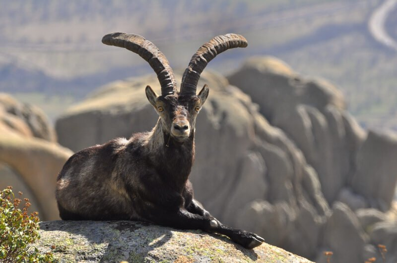 Learn About The Local Wildlife In Our La Pedriza Hiking Tour