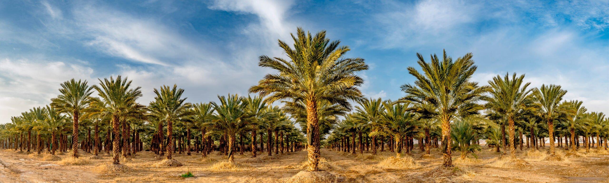 Visit Saudi Arabia Spring